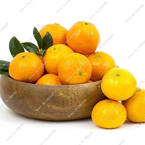 Promotion! 10 Pcs/sac orange vrai graine savoureux Juicy Tangerine Citrus semences Balcon Patio en pot Arbres fruitiers Bonsai Intéressant