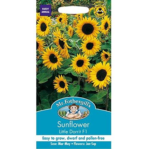M. Fothergills Sunflower Petite Dorrit F1 Graines