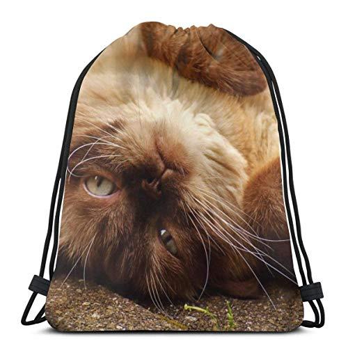 British Shorthair Cat Pet Animal Personalizado Cordón Bolsas de Hombro Bolsa de Gimnasio Mochila de Viaje Ligero Gimnasio para Hombre Mujeres 16.8 x 14 pulgadas