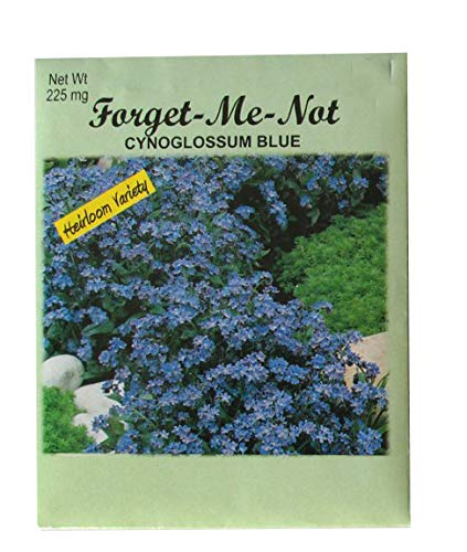 Set of 50 Forget Me Not Valley Green Flower Seed Packets! Flower Seeds in Bulk - Forget Me Nots