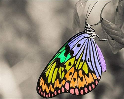 JiaHM Pintura de Bricolaje por números para Adultos Decoraciones de Mariposas de Colores Regalos: Incluye Marco Interior de 40x50 cm