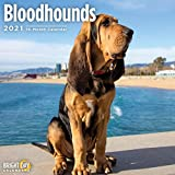 2021 Bloodhounds Wall Calendar by Bright Day, 12 x 12 Inch, Cute Dog Puppy