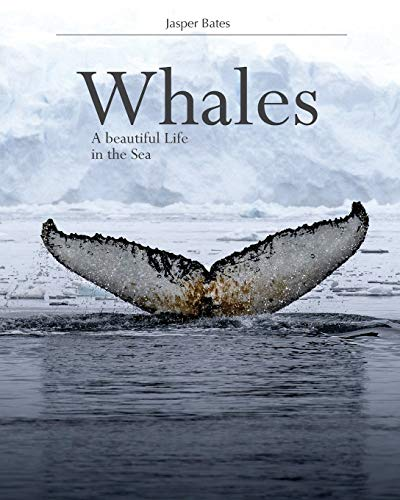 Whales, A beautiful life in the sea: Nature Whales Photography that you will get to know them more