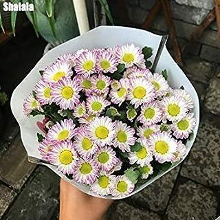 1:150pcs /バッグレア花アウトドアブルーミングハーディ盆栽鉢植えのネイチャーシード簡単に1を成長します