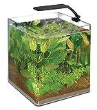 Wave Acquario Box Cubo 25 Orion