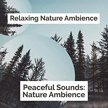 Peaceful Sounds: Nature Ambience