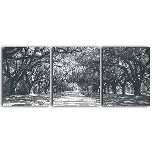 Tree Wall Art - 3-Piece Unframed Black & White Prints, Original Photography Work - Contemporary Artwork - Relaxing Living Room, Office, Bedroom, Bathroom Decorations - Set of 3 (8x10)