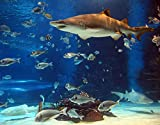 TISAGUER 5D Diamante Pintura por Número Kit,Tiburón de acuario,Bricolaje Diamond Painting kit completo Bordado Decoración del hogar