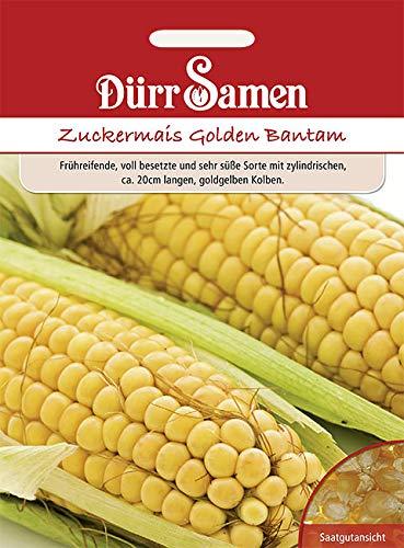 Dürr-Samen - 65 x Zuckermais