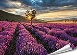 PMP 4life. XXL Poster Lavendel Feld in Frankreich |
