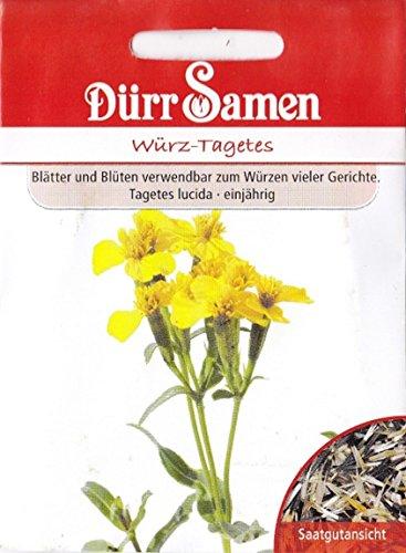 Würz-Tagetes, Tagetes lucida, ca. 50 Samen