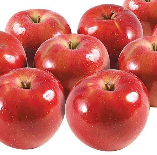 国華園 りんご 山形産 つがる 10kg ご家庭用 林檎