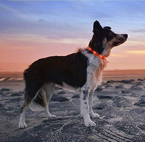 BRIGHTSTAR S-XXL hondenhalsband met ledverlichtingshalsband, USB-oplaadbaar, nachtveiligheidshalsband, lichtgevende halsband voor klein, middelgrote en lange haren, hond, One Size für alle Hunde passend S-XXXL, oranje