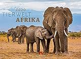 Tierwelt Afrika 2020, Wandkalender im Querformat (45x33 cm) - Tierkalender mit Monatskalendarium