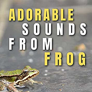 Adorable Sounds from Frog