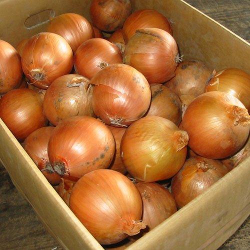 北海道産 玉ねぎ 2Lサイズ 10kg詰め 玉葱 タマネギ たまねぎ