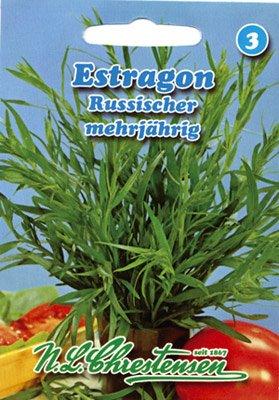 Estragon Russischer mehrjährig