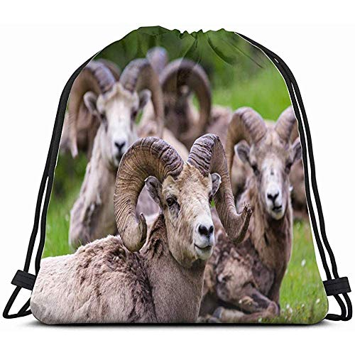 Custom Drawstring Bags,Bighorn Sheep Ovis Canadensis Three Animals Wildlife Adult Nature Drawstring Backpack Bag For Kids Boys Girls Teens Birthday, Gift String Bag Gym Cinch Sack For School And