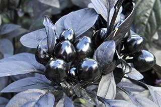 30++ Organic Black Pearl Pepper Seeds
