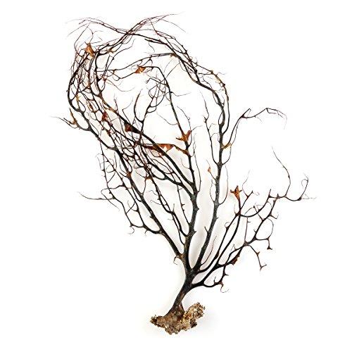 UEETEK Ornamento di Corallo Nero Naturale Serbatoio di Pesce per Acquario Sea Fan di Coralli Decorazioni