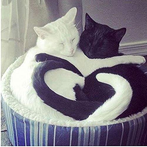 exclusivo XIGZI 5D Diamante Bordado Gato negro Gato blanco Amor Punto Punto Punto de Cruz Mosaico Animal Diamante Decoración Hogar DIY Sin Marco  a la venta