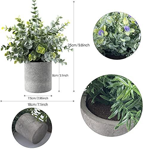 NOMAKK Plantas