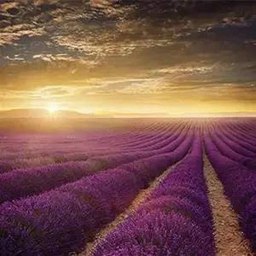 Aerlan Seasons Ornamental Plants Flower Seeds,Rare Ornamental Flowers,Lavender Provence Seed Garden-100pcs_C