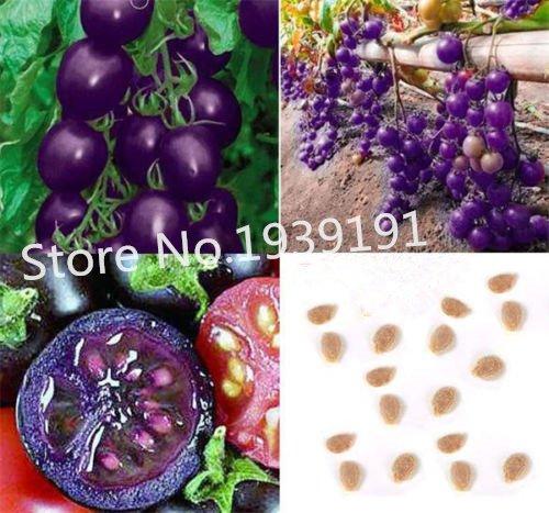 Un paquet de 100 graines Violet tomates cerises semences Balcon Fruits semences Légumes Graines en pot Bonsai pot Plant de tomate