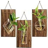 Cedilis Wall Glass Planter