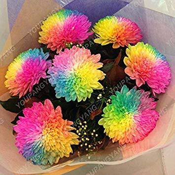 ASTONISH Erstaunen SEEDS: 22: 200pcs / pack Heiße Gerbera Samen Topfblumen Samen In Bonsai DIY Hausgarten-Anlagen mit starken Fähigkeit 22 To Grow