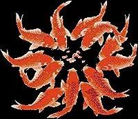 刺繍キットクロスステッチ刺しゅう金魚刺繍工芸品初心者手作りのの針仕事(11CT)大人の子供手芸ギフトキット家具装飾40x50cm,アユニークな家の装飾