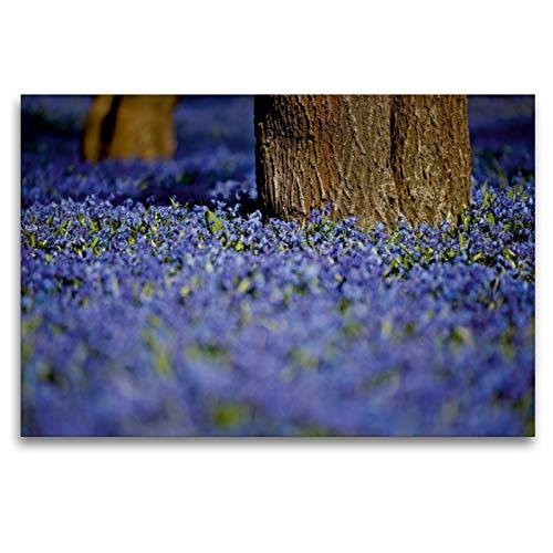 CALVENDO Premium Textil-Leinwand 120 x 80 cm Quer-Format Sibirischer Blaustern, Leinwanddruck von Bild-erzaehler