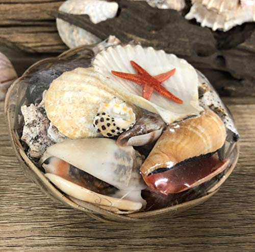 Mezzaluna Geschenkkorb mit echten Muscheln, Heimdekoration | Aquarium | Basteln, 10cm Basket of SMALL Shells