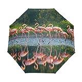 Suzanne Betty - Paraguas de viaje con diseño de flamencos caribeños (3 pliegues, resistente al viento, UV automático