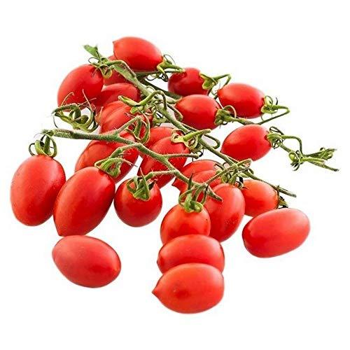 Portal Cool 100 graines Tomate cerise rouge poire