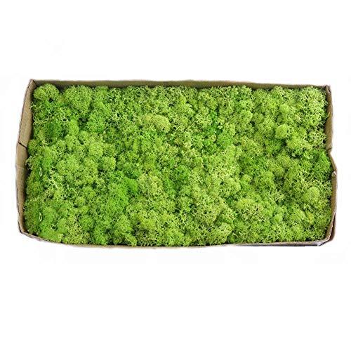 Musgo Preservado Natural, Flor Eterna Moss Flower Box 500G, para Terrarios Y Bonsai,D