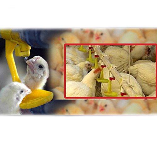 Adhere To Fly 10 PCs Trinkbecher Chicken Hanging Automatische Wasserschale Nippel Trinker Chicken Farming Equipment Farm Tools - 6