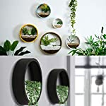 ZEETOON 3 Pack Set Modern Wall Planters Succulent Planter Circle Metal Flower Pot Indoor Air Plant Vertical Container Hanging Vase Home Decoration Size S,M,L Black, with 3 Artificial Succulent Plants 10 MATERIAL: Stabilized iron alloy metal with powder coating ensures long lasting color and withstands extreme weather conditions. Tempered and limpid glass feasts your eyes, add visual intrigue to this wall hanging. Do not rust and no unpleasant smell. PLANTS: Great for succulent plants, air plant, mini cactus, faux plants, artificial plant. It also works for mint, herbs, basil, ivy, flowers, climbing plants, evergreens. The possibilities are only limited by your imagination; display them in a wall hook plant holder, a wall mount, a geometric glass vase, or even in a live wreath. They can even make the perfect desk centerpiece for your office. IDEAL: ZEETOON Wall Vase Perfect for displaying your favorite hanging plants, this wall holder is a basic piece that will fit perfectly anywhere. Outdoor or indoor, kitchen, bedroom, great garden shed decor, farmhouse style wall decor, front entry way, or mounting on bathroom.