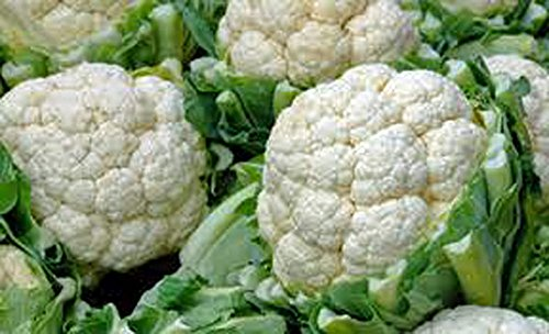 Cauliflower Seed, Snowball Y, Heirloom, Non GMO, 25 Seeds, Large, Delicious and Healthy