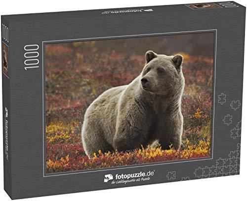 Puzzle 1000 Teile Grizzly (Ursus arctos) Bär, Denali Nat'l Park, Alaska - Klassische Puzzle, 1000/200/2000 Teile, in edler Motiv-Schachtel, Fotopuzzle-Kollektion 'Tiere'