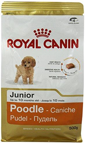 ROYAL CANIN Pudel Junior 500 g, 1er Pack (1 x 500 g)