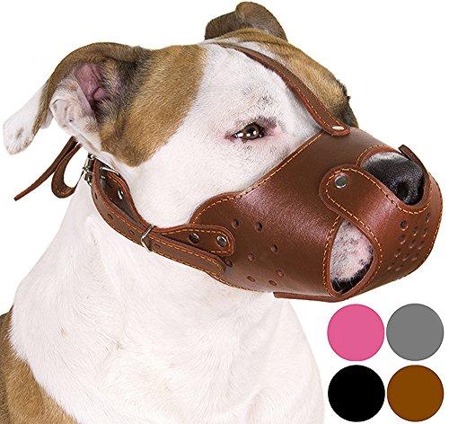 CollarDirect Hunde-Maulkorb Pitbull Amstaff aus echtem Leder, Staffordshire Terrier (Schokoladenbraun)
