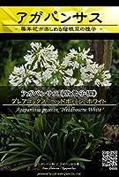 【種子】 Prime Perennial Collection アガパンサス プレアコックス ヘッドボーン ホワイト Life with Green