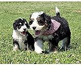 FJKEFJH Kits de Punto de Cruz Contado, cachorro 40X50cm 14CT Conjunto de Kit de Punto de Cruz de Bordado DIY Tela a Mano Hilos de Color Dibujo de Aguja de paño de algodón
