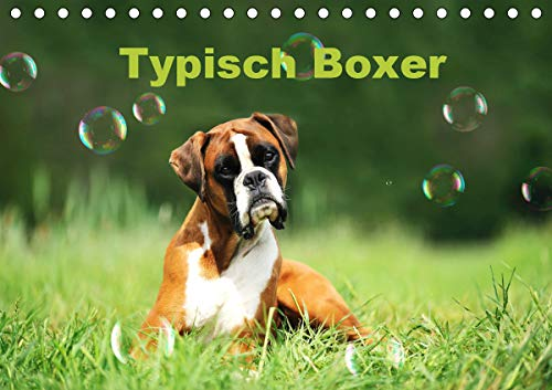 Typisch Boxer (Tischkalender 2021 DIN A5 quer)