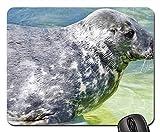 Yanteng Alfombrillas de ratón para Juegos, Alfombrilla de ratón, estación de Sello de Agua de Acuario Seal Ecomare Texel
