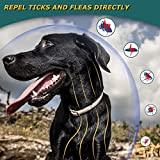 IMG-1 collare antipulci per cani naturale