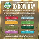 Petlife Oxbow Orchard Grass Hay for Small Pet, 1.13 kg 10
