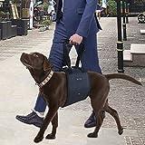 Imbragatura di supporto per il sollevamento dei cani in...