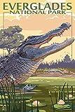 Die Everglades National Park, Florida–Alligator Szene